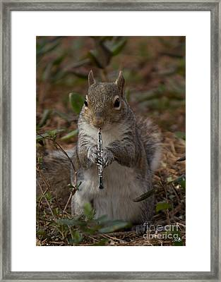 Squirrel With His Obo Framed Print