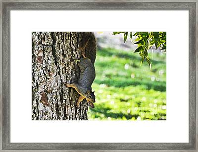 Squirrel With Pecan Framed Print