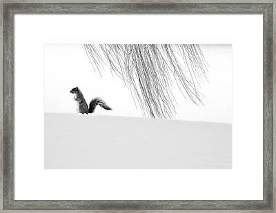 Squirrel Framed Print by Yue Wang
