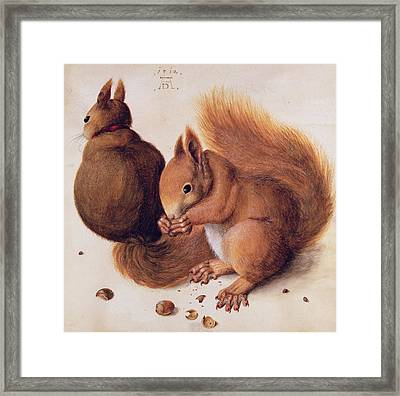 Squirrels Framed Print by Albrecht Duerer