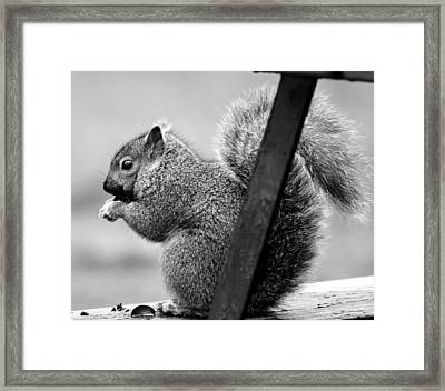 Framed Print featuring the photograph Squirrels by Ricky L Jones
