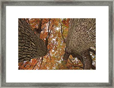 Squirrel's Vision Of A Good Day Framed Print