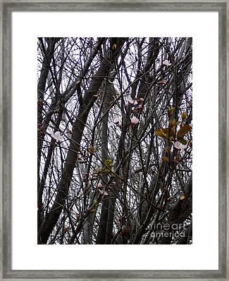 Spring Blossoms Framed Print by Carla Carson