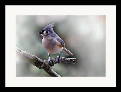 Kinds Of Birds Framed Prints