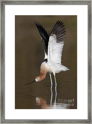 Framed Print featuring the photograph Sstretchhh by Bryan Keil