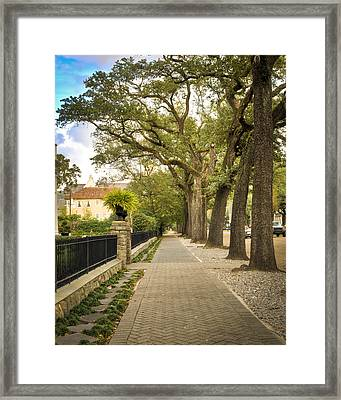 St Charles Live Oak Trees Framed Print by Ray Devlin