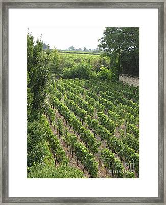 Framed Print featuring the photograph St. Emilion Vineyard by HEVi FineArt