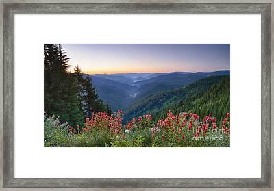 St. Joe Wildflowers Framed Print