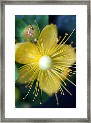 Framed Print featuring the photograph St. John by Debra Kaye McKrill