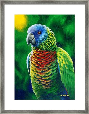 St. Lucia Parrot - Fine Colours Framed Print by Christopher Cox