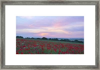 St Margarets Poppies Framed Print