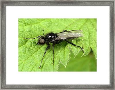 St Marks Fly Framed Print by Nigel Downer