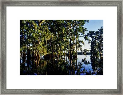 St Martin Parish Lake Martin Cypress Swamp Framed Print by Thomas R Fletcher