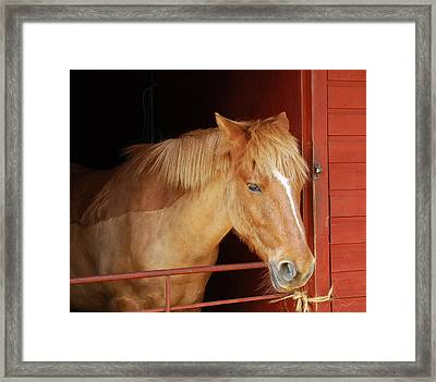 Stabled Framed Print