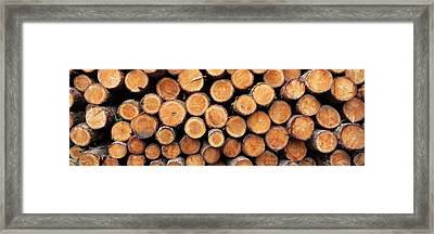 Stack Of Logs In Forest, Burrator Framed Print by Panoramic Images