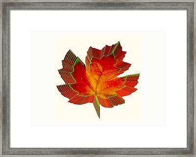 Stacked Maple Leaf  Framed Print by Susan Elizabeth Dalton