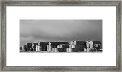 Stacked Round Hay Bales Bw Panorama Framed Print by James BO  Insogna