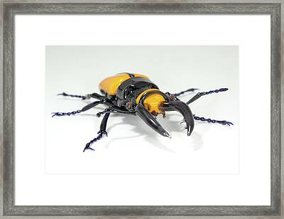 Stag Beetle Framed Print by Tomasz Litwin
