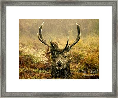 Stag Party The Series. One More For The Road Framed Print