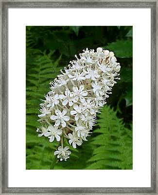 Framed Print featuring the photograph Stagger Grass Lily by William Tanneberger