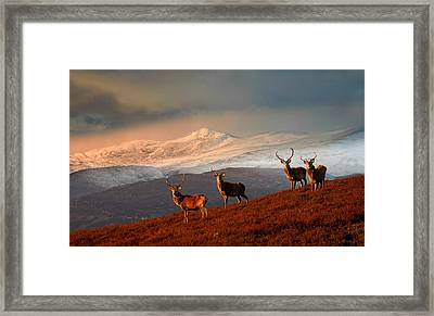 Stags At Strathglass Framed Print