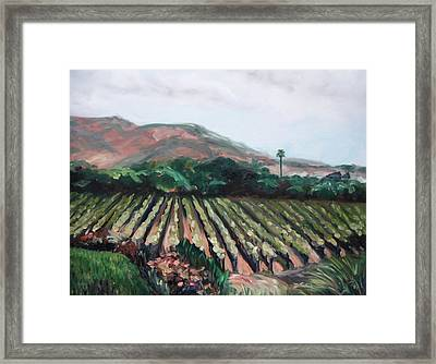 Stag's Leap Vineyard Framed Print