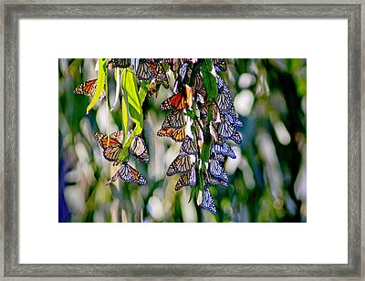 Stained Glass Butterflies Framed Print