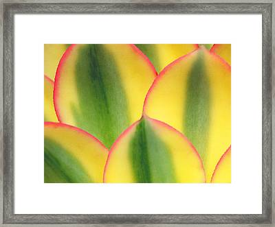 Stained Glass Framed Print by Irina Wardas