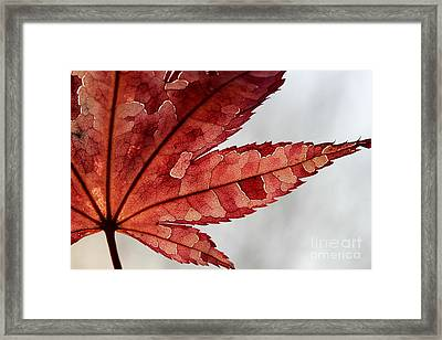 Framed Print featuring the photograph Stained Glass by Kenny Glotfelty