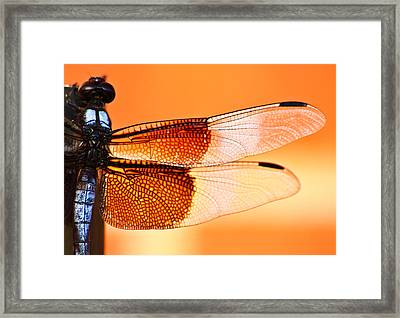 Stained Glass Framed Print by Mark Alder