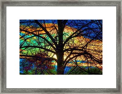 Stained Glass Tree Framed Print
