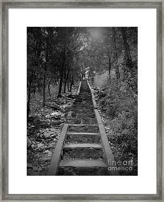 Stairway In The Woods Framed Print