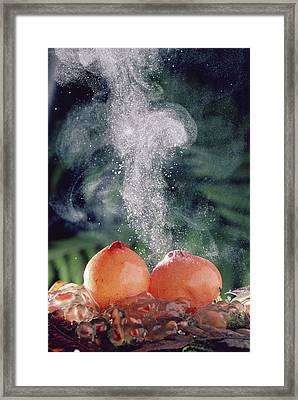 Stalked Puffball-in-aspic Calostoma Framed Print