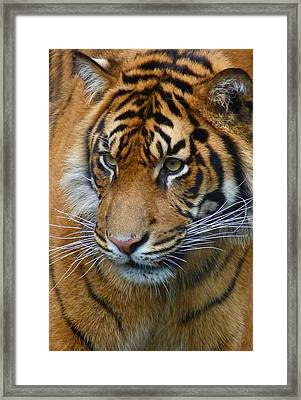 Stalking A Snack Framed Print by Margaret Saheed