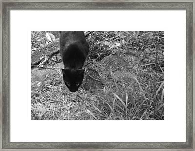 Stalking Cat Framed Print by Melinda Fawver