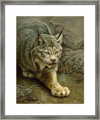 Stalking Lynx Framed Print
