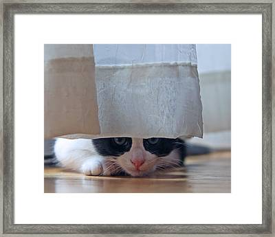 Stalking Me Framed Print