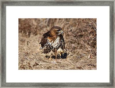 Stalking Framed Print by Mike Farslow