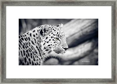 Framed Print featuring the photograph Stalking Prey by Stwayne Keubrick