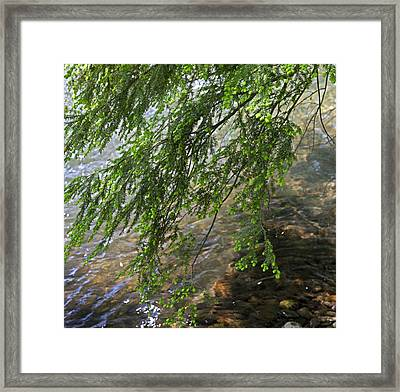 Stalking Trout Framed Print by John Stephens