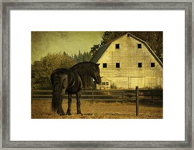 Stallion At Rest D1535 Framed Print by Wes and Dotty Weber