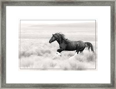 Stallion Blur Framed Print by Wes and Dotty Weber