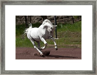 Stallion Framed Print by Wes and Dotty Weber