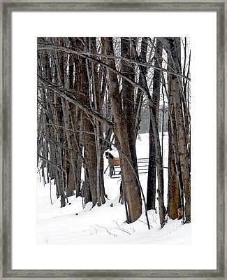 Stallion In The Woods Framed Print by Patricia Keller