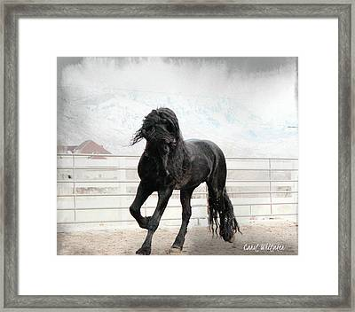 Stallion Magic Framed Print