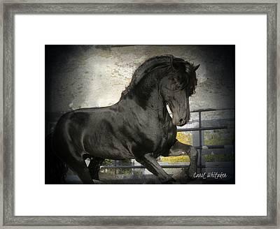 Stallion Power Framed Print by Royal Grove Fine Art