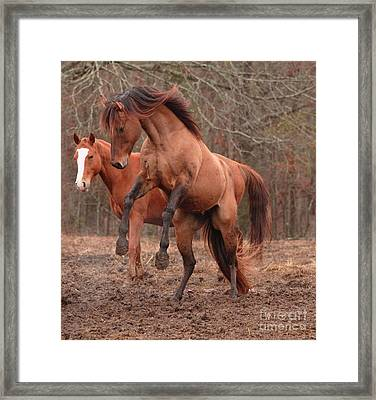 Stallion Rearing Framed Print by Russell Christie