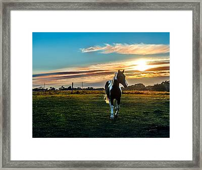 Stallion Sunset Framed Print