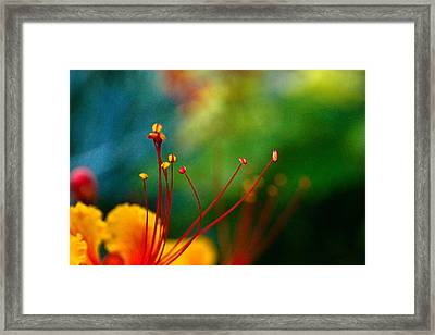 Stamen And Pistil Framed Print