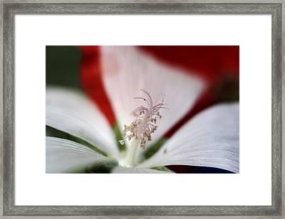 Stamen  Framed Print by Carolyn Reinhart